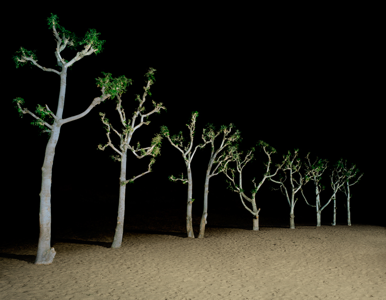 trees-at-night-ver2